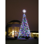 28' OREGON CASCADE FIR TREE WITH LED LAMPS